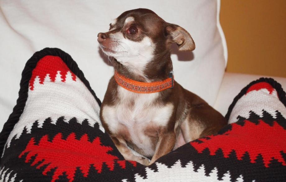 Dog Portrait1