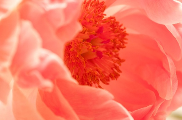 Patti-Bose-Red-Flower