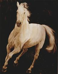 Martinez-White-Horse-1