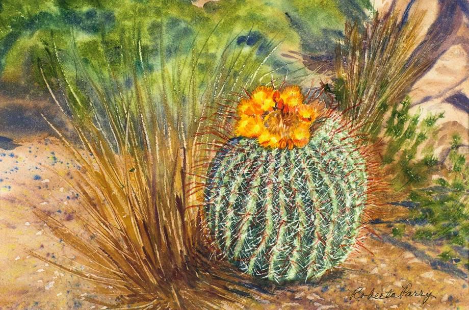 Roberta-Parry-Barrel-Cactus-Abloom