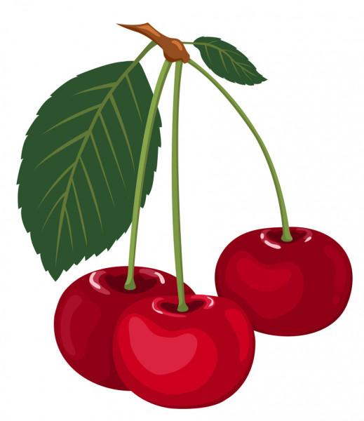 depositphotos_4798661-stock-illustration-three-cherries-on-a-branch